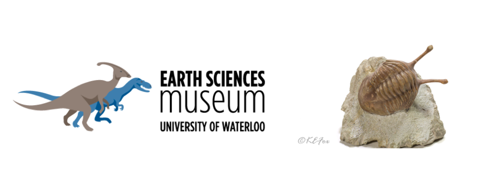 Earth Sciences Museum and Trilobite