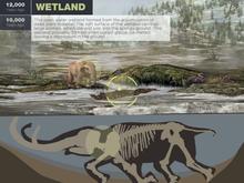Mastodon app second banner