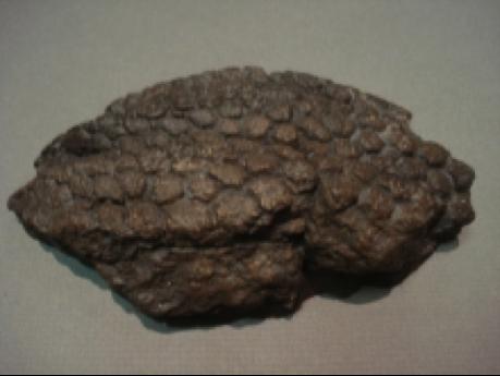 459 x 345 png 223kBTyrannosaurus
