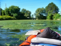 Eutrophication in Cootes Paradise