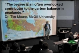 """The beaver is an often overlooked contributor to the carbon balance in peatlands."""