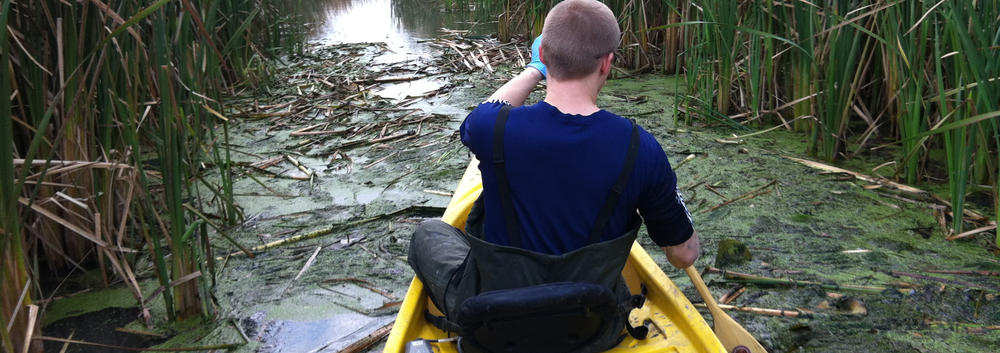 Chris Parsons sampling in Coot's Paradise near Toronto.