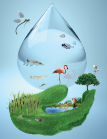 Image of World wetlands day poster
