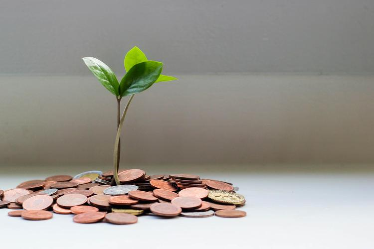 plant growing out of a base of coins