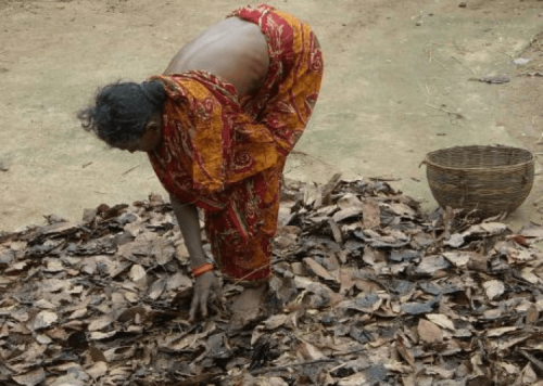 Indian woman bending over and touching pile of leaves she is standing on