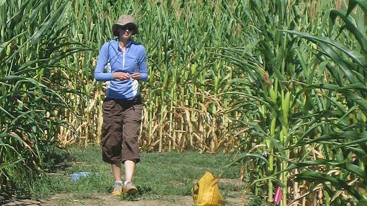 Woman in blue jacket and brown capris walking in a field of corn