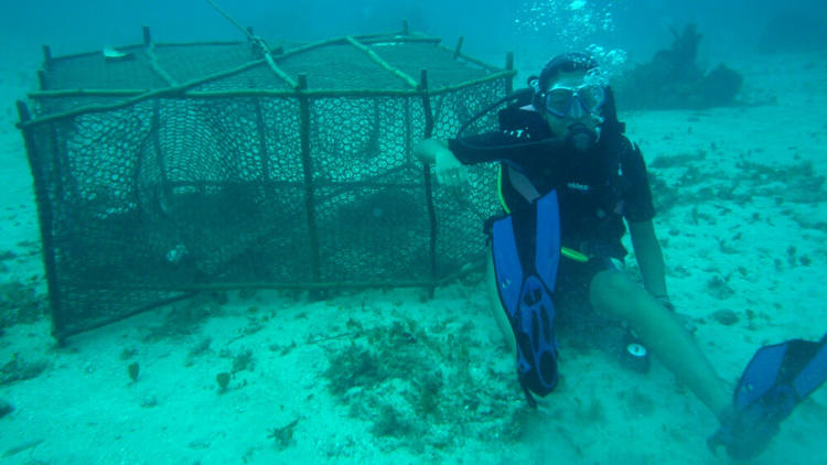 Scuba diver under water next to cage giving 'thumbs up'