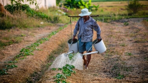 Rural farmer watering crops by hand