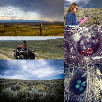 Collage of fieldwork images includes baby birds in a nest and riding an ATV on a prarie trail