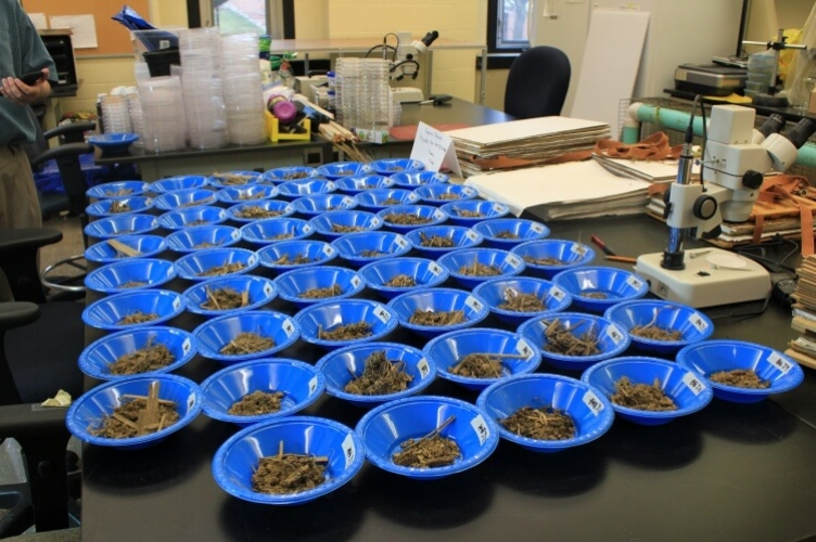 Table full of small blue dishes filled with earthworm burrow samples