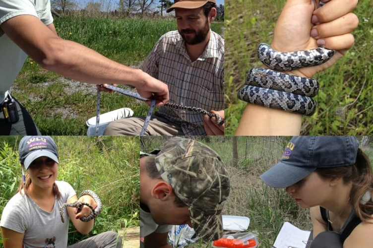 Collage of field work images includes: holding and measuring a snake