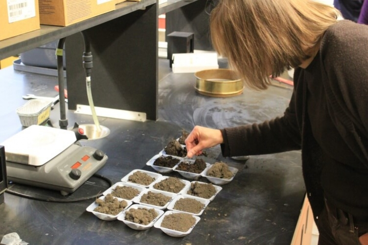 Professor leaning over several small white trays of soil, rubbing soil between her fingers