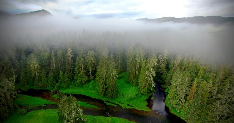 Aerial view of BC coast with lush green forest topped with mist and mountains in the background