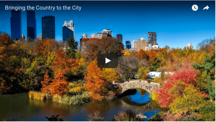 Screenshot of video thumbnail: city park in fall colors