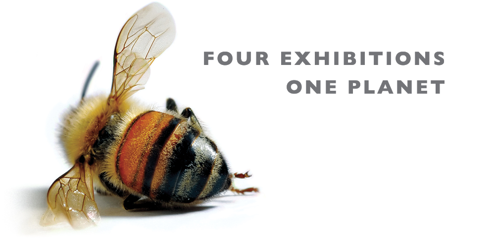 four exhibitions one planet text with a photo of a bee