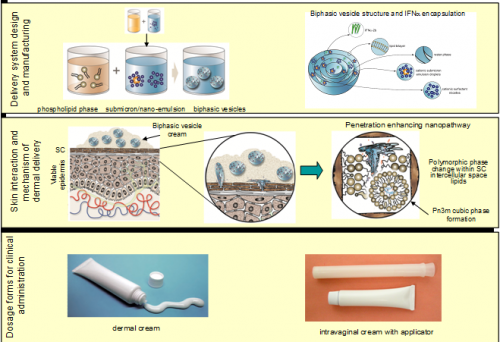 Delivery system for dermal delivery of biphasic vesicles in the treatment of HPV.