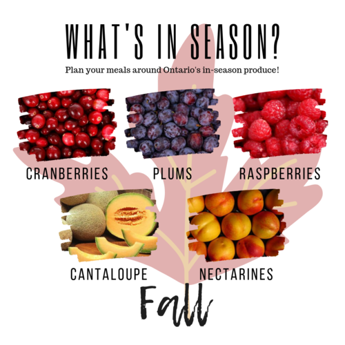 Fall fruits cranberry plums raspberries cantaloupe nectarines