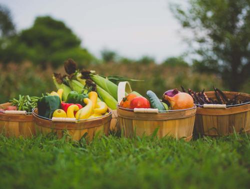 Fresh vegetables in baskets