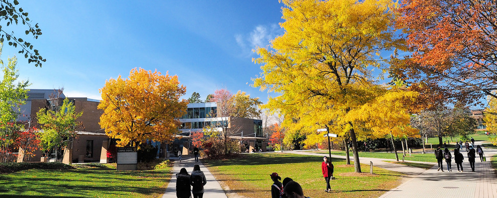 Image of fall trees on campus