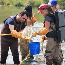 Faculty of Environment students wearing chest waders standing in a pond with nets and buckets in hand
