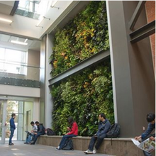 living wall in Environment 3 building