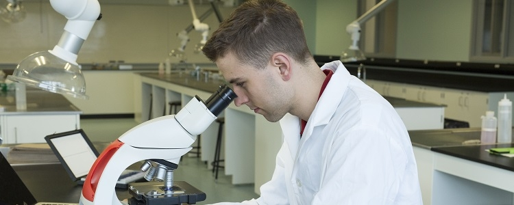 A student in the Life Sciences program looks through a microscope.