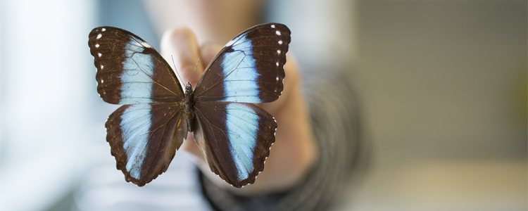 A butterfly specimin in the Biology program at the University of Waterloo.