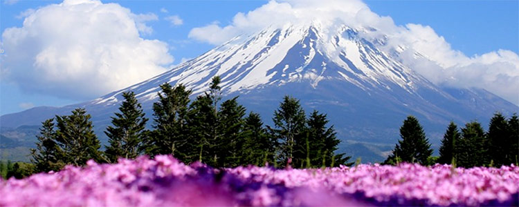 Mountain in distance with pink flowers in foreground