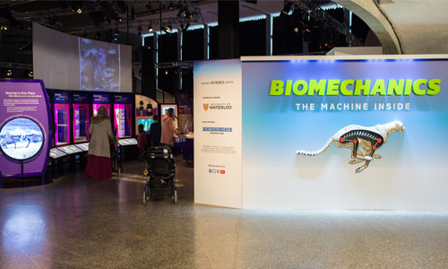 Biomechanics display