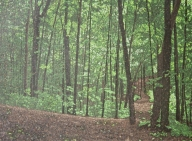 green woods painting