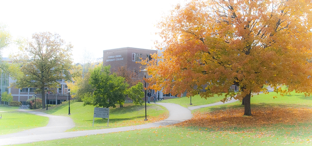Grebel in the fall