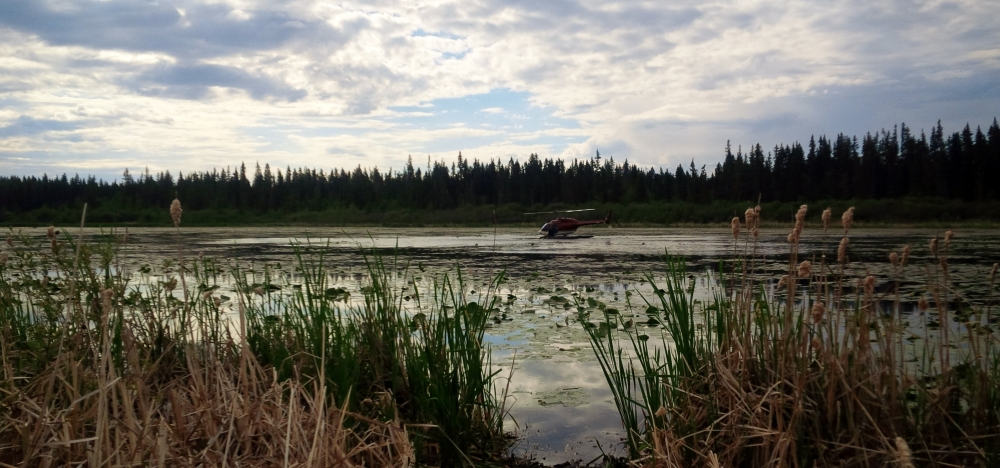 Under and overcast sky, a red helicopter sits on top of a small lake that is full of lily-pads.