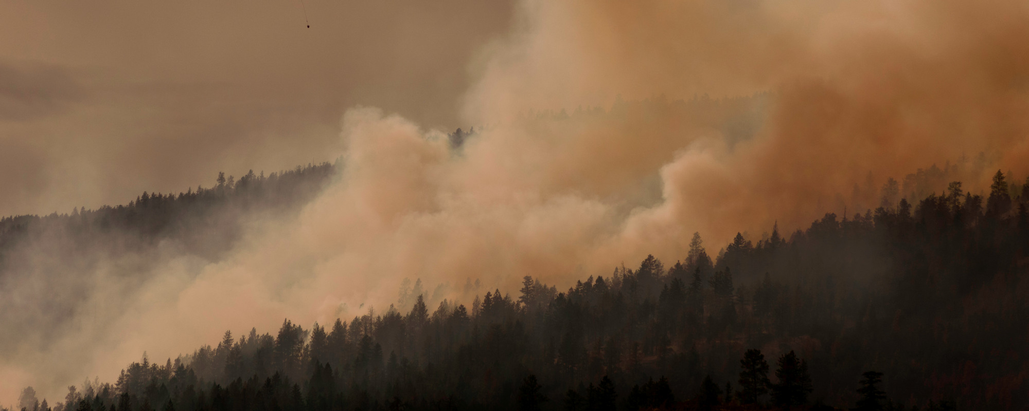 Smoke and wildfire behind a tree line in the distance