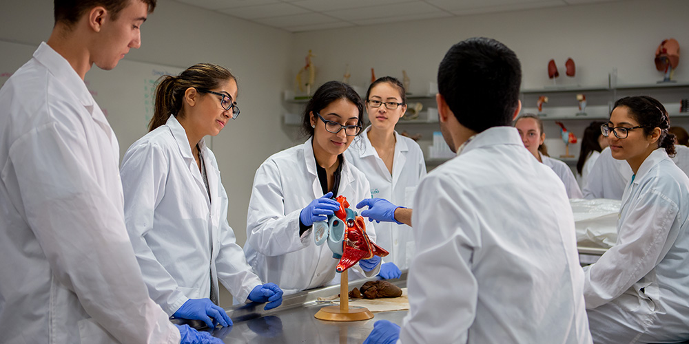Students learning in anatomy lab.