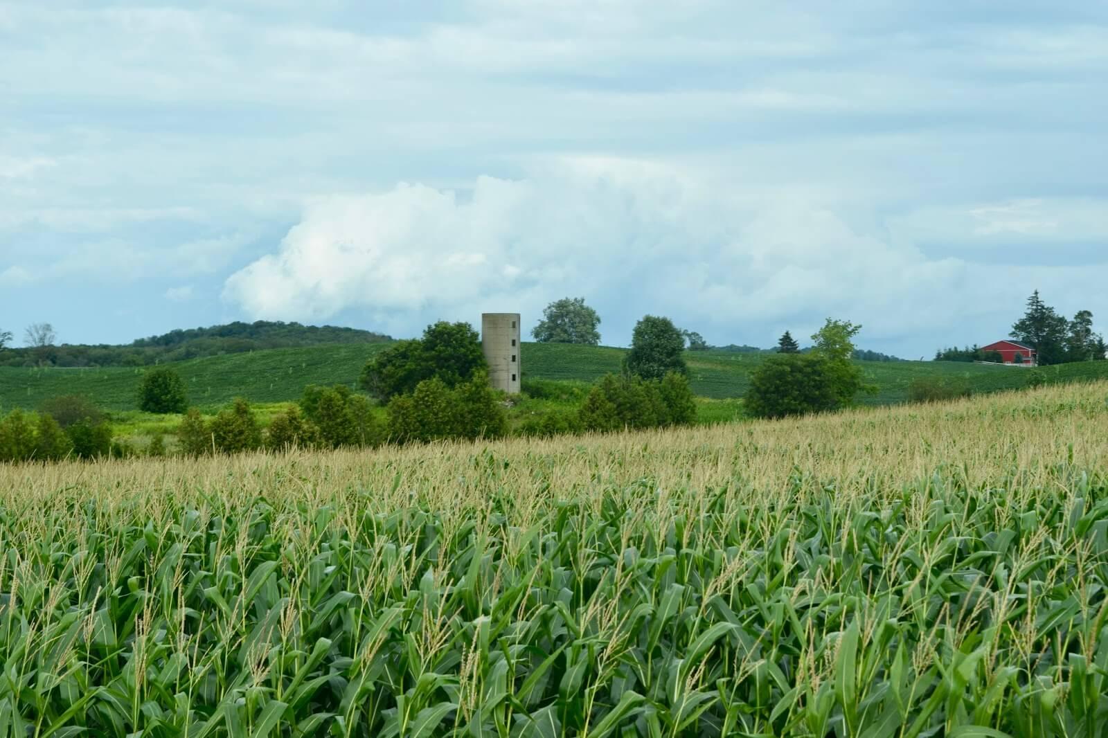 Stone silo in background of cornfield