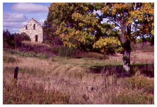 Neglected stone barn in background of field with tree