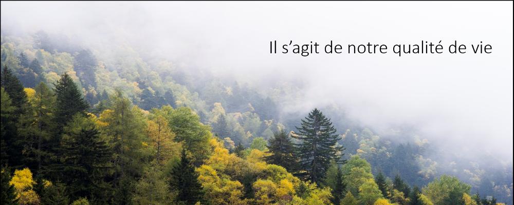 Bannière de la Mesurer ce qui compte et faire en sorte que les mesures comptent du CIW avec paysage forestier