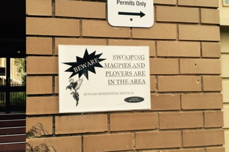 Sign warning of swooping magpies