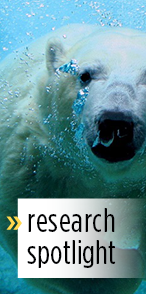 "Polar bear with words ""research spotlight"" on it"