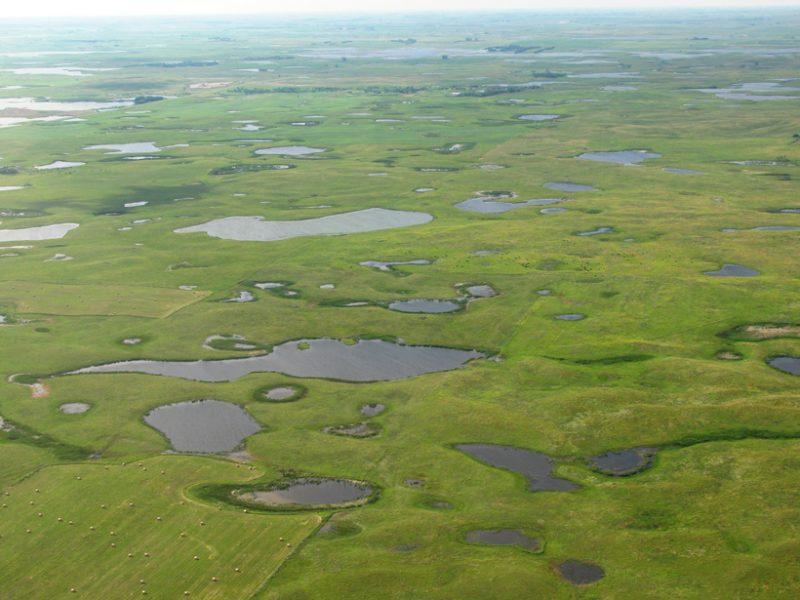 prairie wetlands