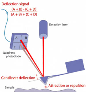 Schematic of Atomic Force Microscopy (JPK)