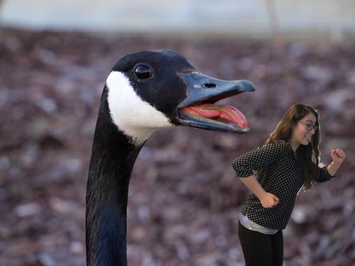 giant goose chasing Carmen