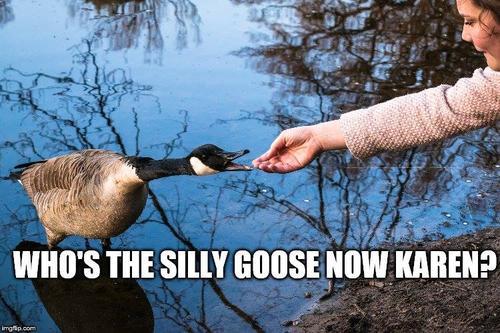 who's a silly goose now, karen?