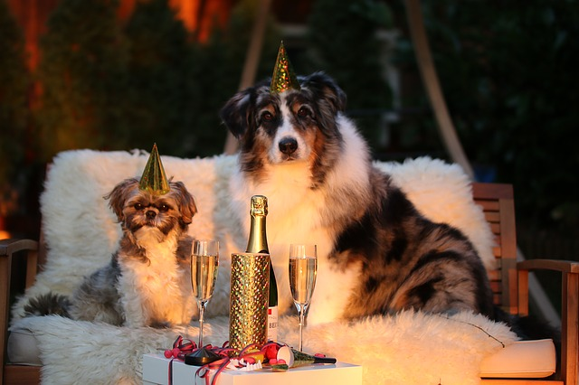 dogs celebrating news years with hats and champagne