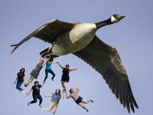 seven people with goose falling from the sky