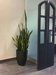 Potted plant in the Dana Porter Library
