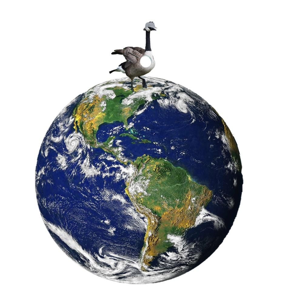 goose on globe