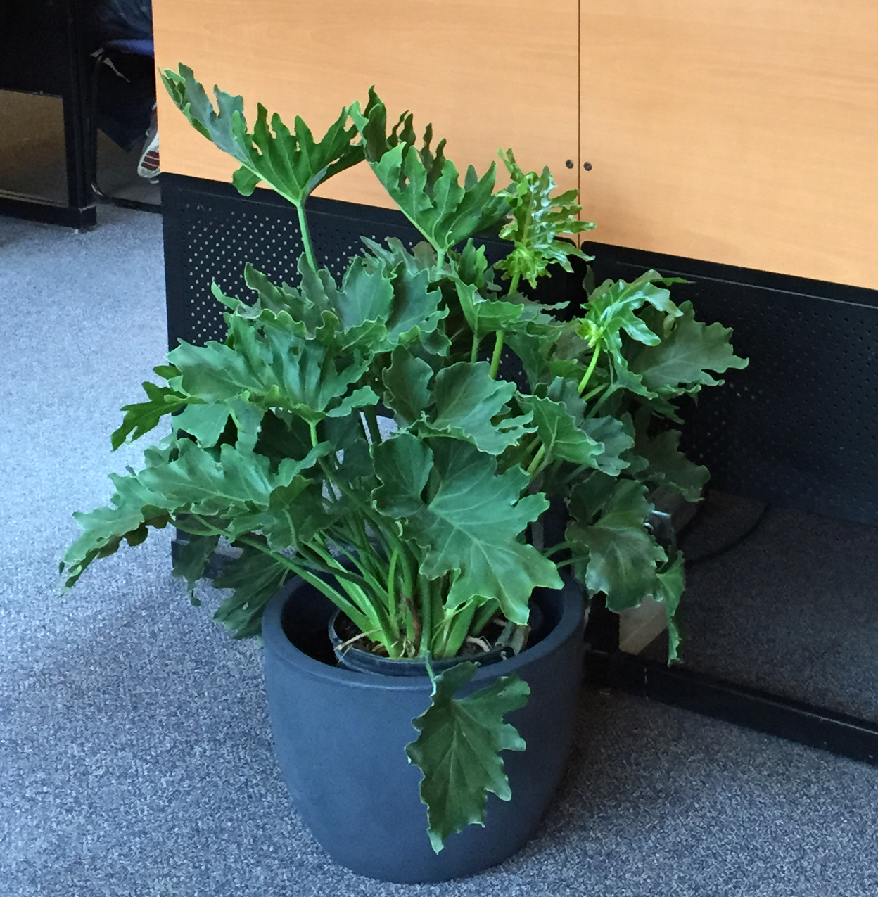 Potted plant in Davis silent study area