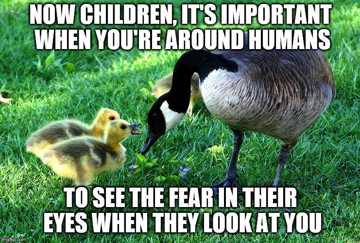 mother goose telling babies to make sure they see the look of fear in the eyes of people