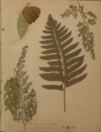 Page of a scrapbook with botanical cuttings.